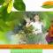 Arbori si arbusti ornamentali - SC BUTUCUL SRL