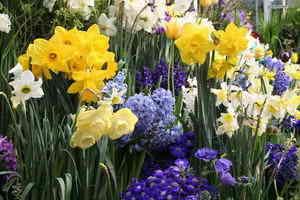 flori-de-primavara-1