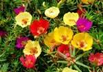plante-si-flori-de-interior-6