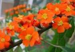 plante-si-flori-de-interior-7
