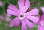flori-rare-1