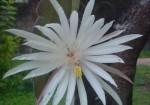 flori-cactus-orhidee