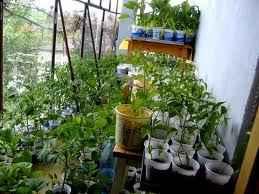 plantarea-rasadurilor-1