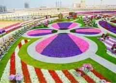 gradina-Dubai