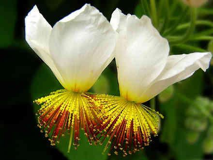 plante-exotice-2