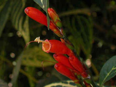 plante-exotice-3