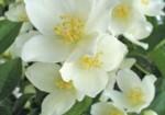 plante-medicinale-6
