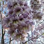 arborele-printesei-2