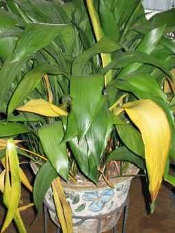boli-la-plante