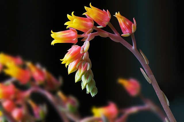 flori de interior rezistente