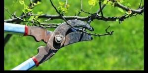 tunderea-pomilor-fructiferi