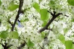 gradina de primavara pomi fructiferi