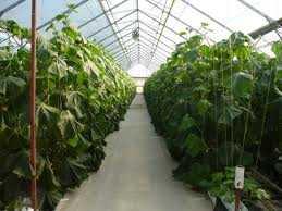 culturi hidroponice de legume si fructe